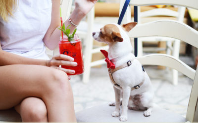 PET-FRIENDLY PITSTOPS ALONG THE N2