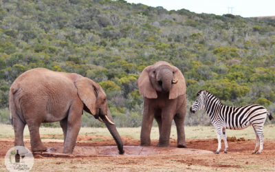 CAPE TOWN TO ADDO ELEPHANT NATIONAL PARK ON A BUDGET